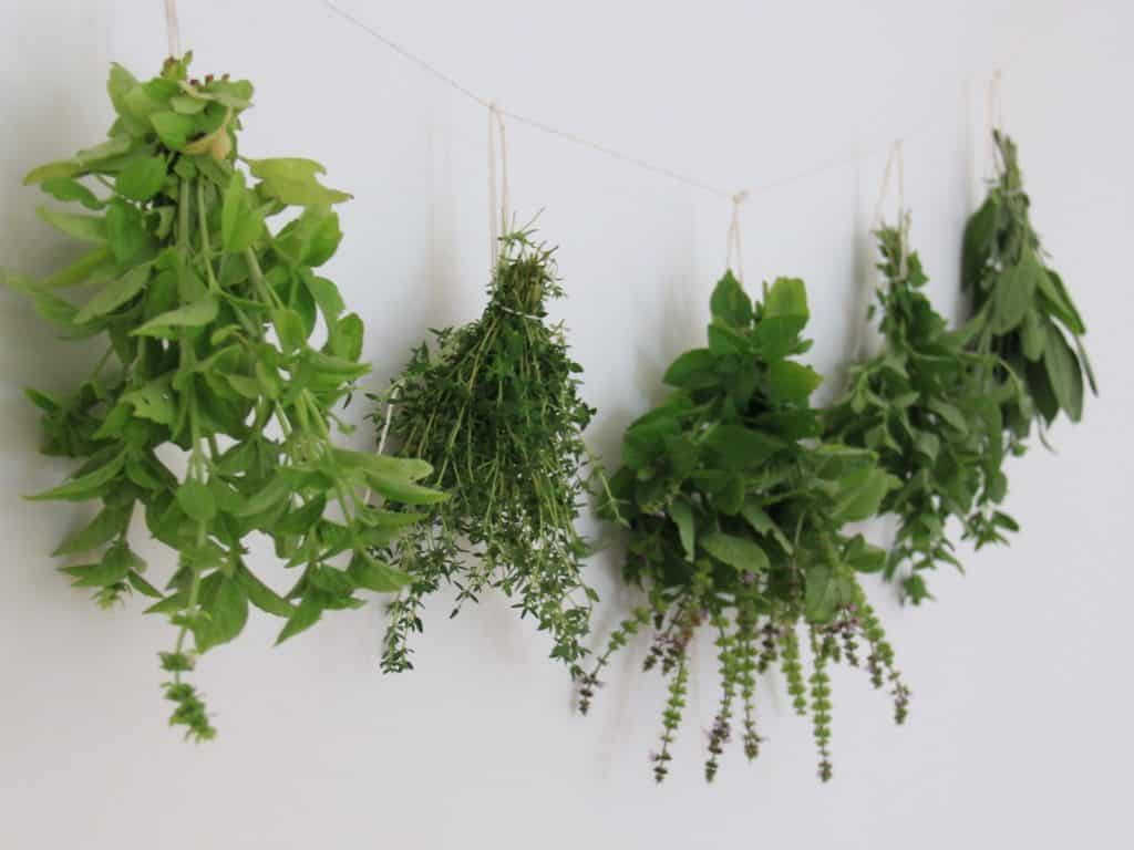 How to Grow Basil Indoors | Home for the Harvest