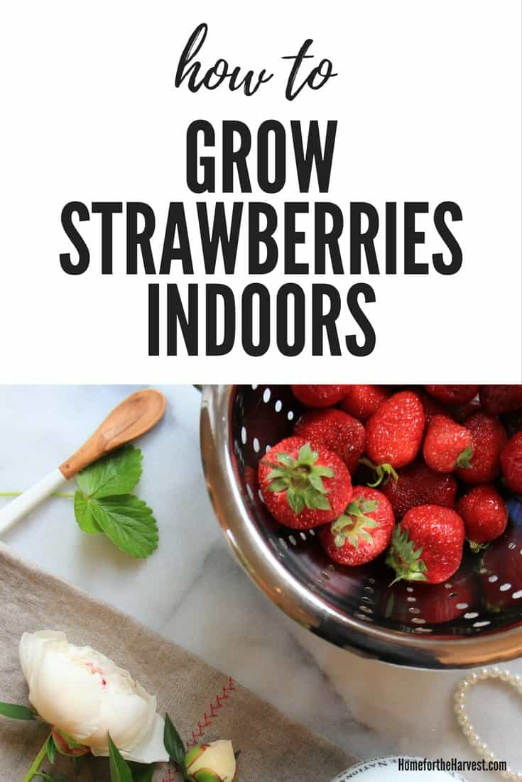 - composite image about growing strawberries indoors year round