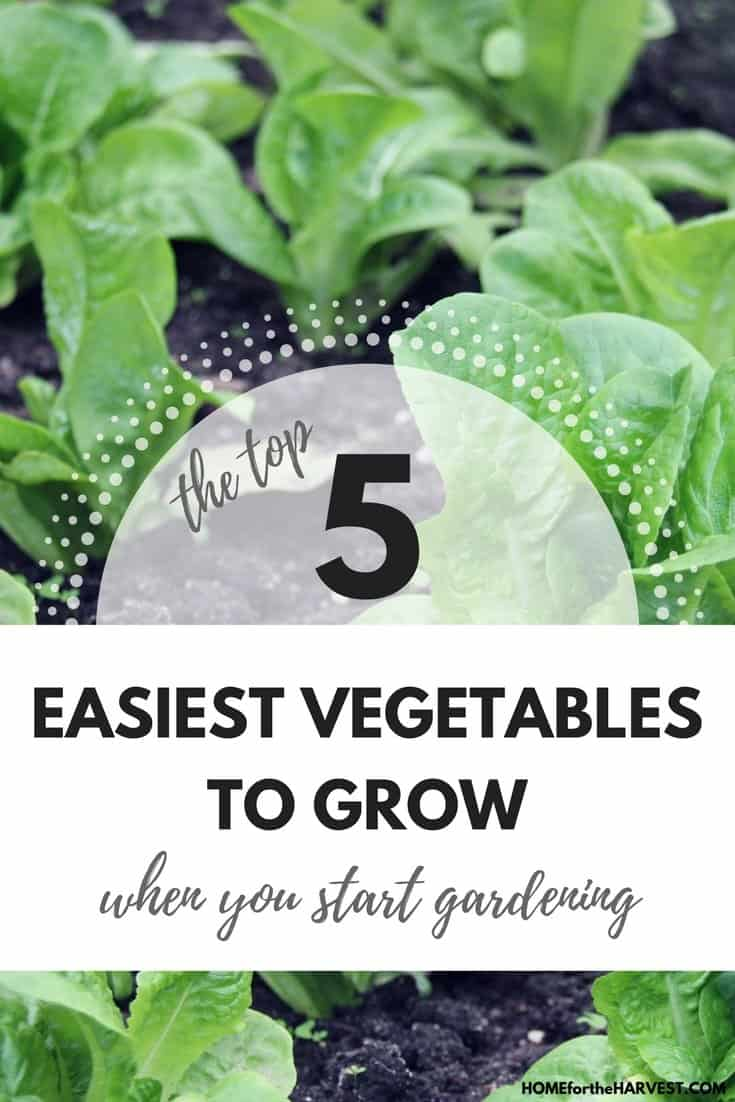 The top 5 easiest vegetables to grow when you start for Easiest vegetables to grow
