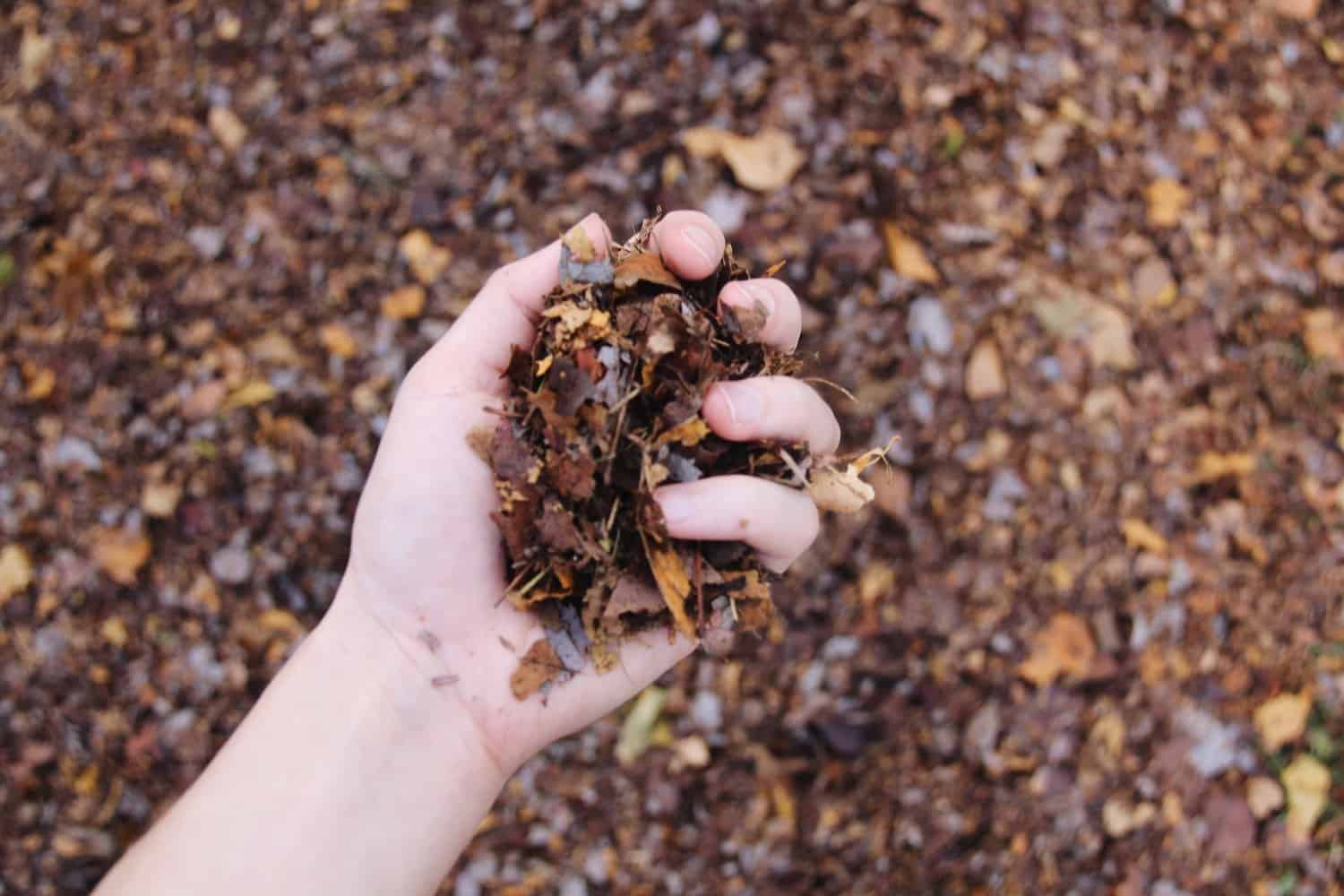 Shredded leaves as organic garden mulch | Home for the Harvest