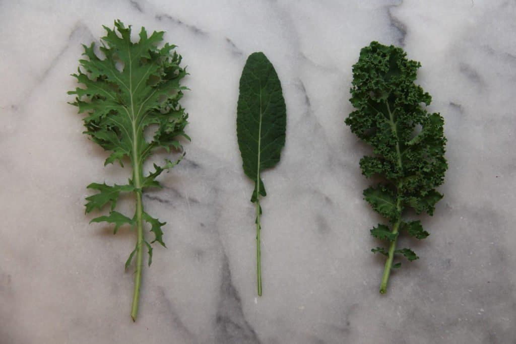 Different Types of Organic Kale | Home for the Harvest Gardening Blog