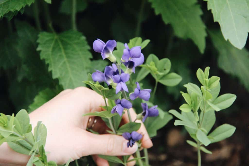 How to Start a Garden - Observing Your Garden | Home for the Harvest