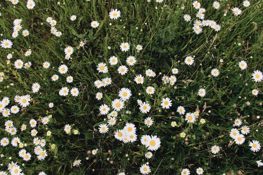 Organic Gardening Mistakes - Common Pitfalls to Avoid