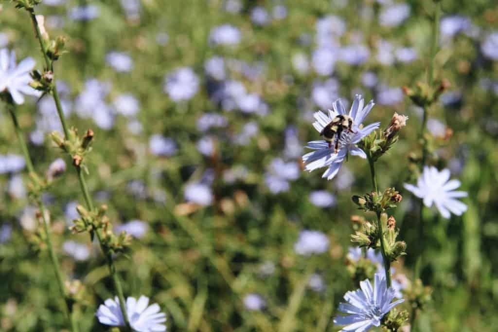 eco-garden wildflowers