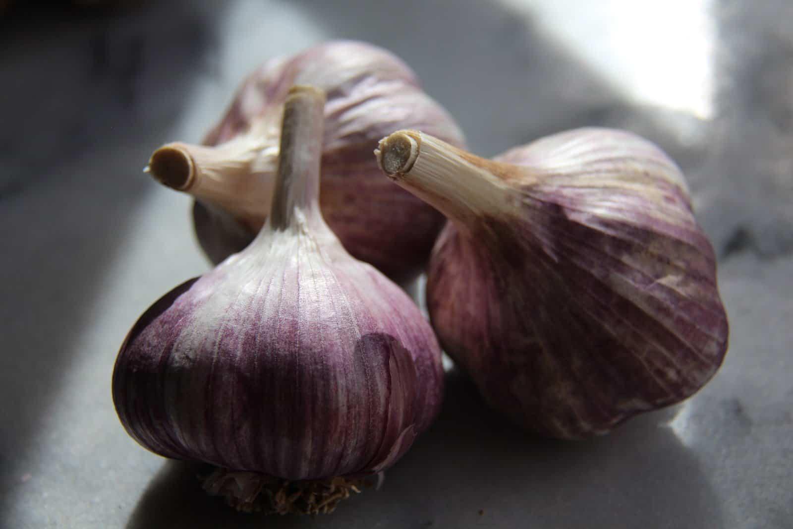 Organic Garlic Bulbs | Home for the Harvest