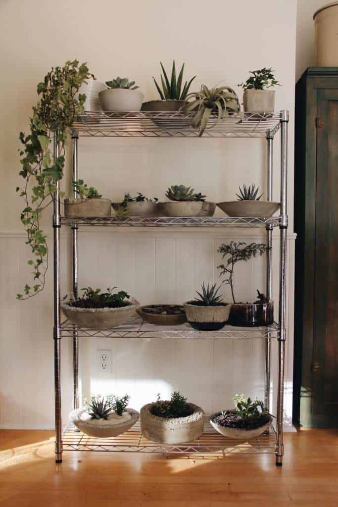 Plant Stand of Concrete Succulent Bowls | Home for the Harvest