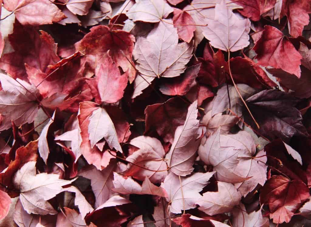Turning autumn leaves into leaf mold - instructions for how to make leaf compost for the garden