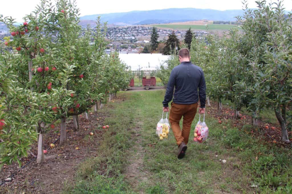 Apple Picking at Davison Orchards | Home for the Harvest