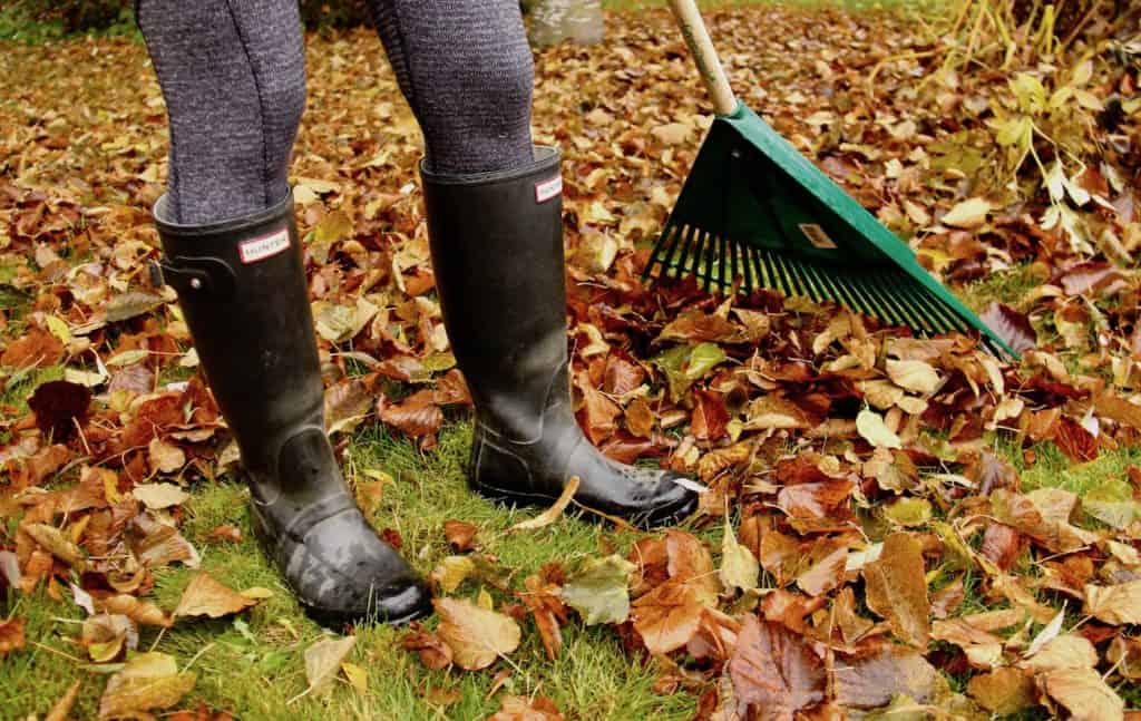 Fall Yard Clean Up - The Ultimate Homeowners Guide