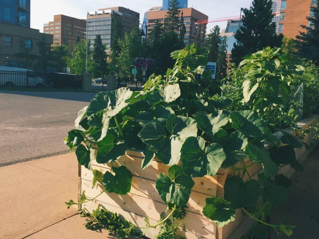 Urban Community Garden | Home for the Harvest