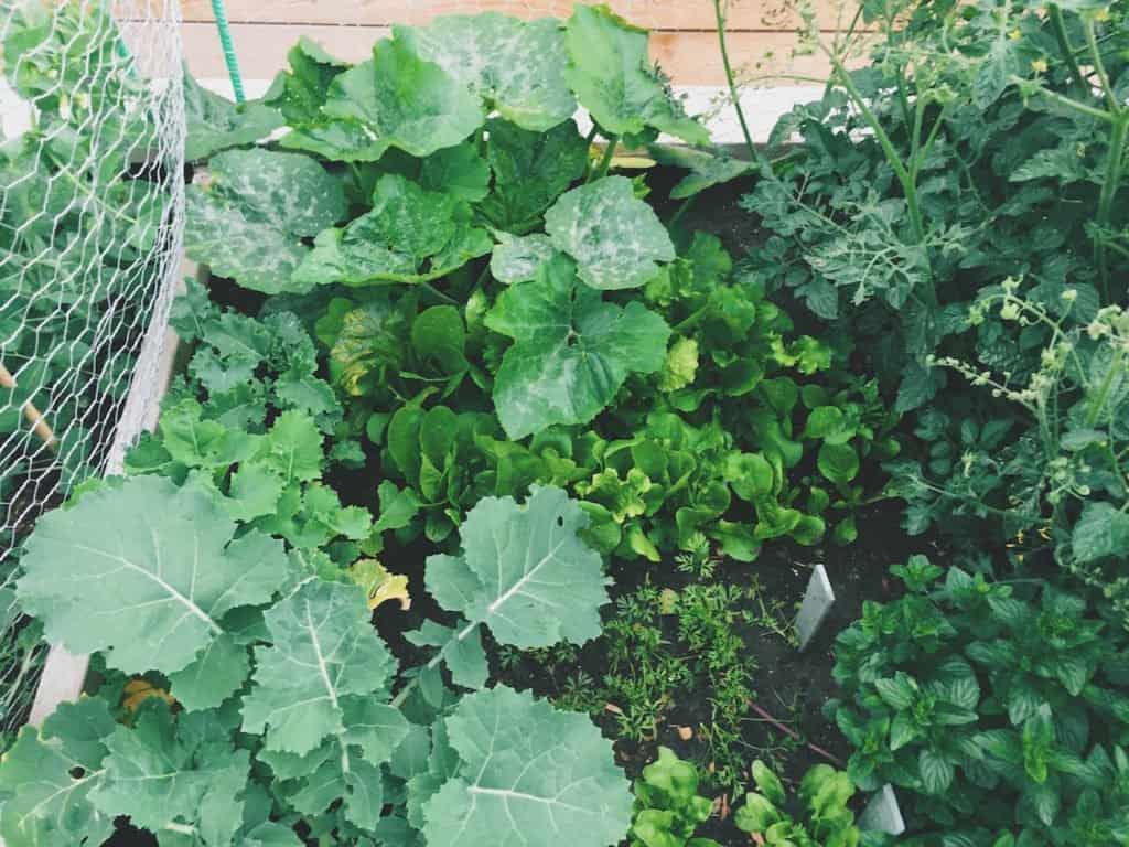 Urban Garden | Home for the Harvest