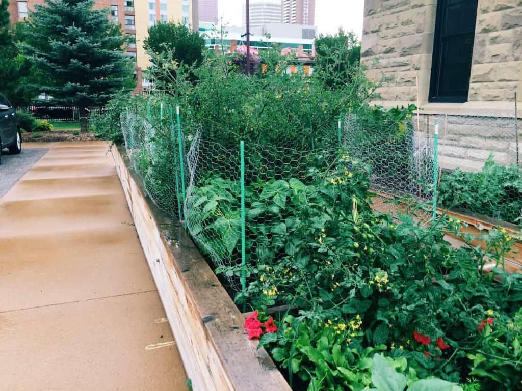 Urban Garden in Calgary | Home for the Harvest