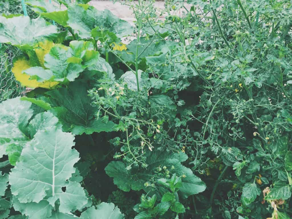 Urban Gardening in Canada | Home for the Harvest