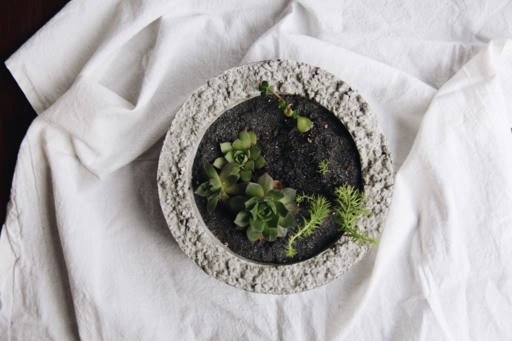 modern succulent terrarium garden bowl with black sand and white background