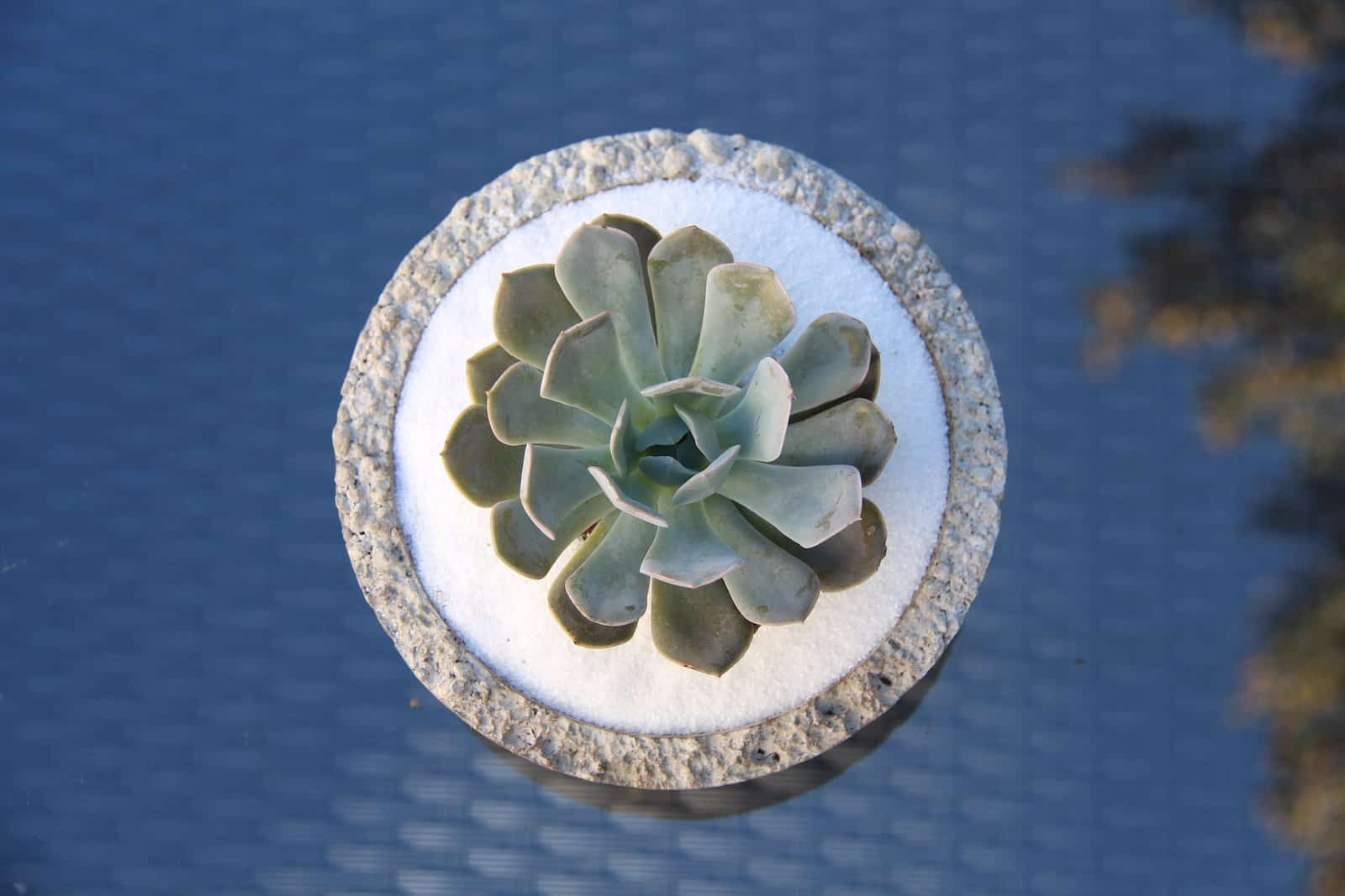 Succulent Bowl - A gift for your favourite gardener | Home for the Harvest
