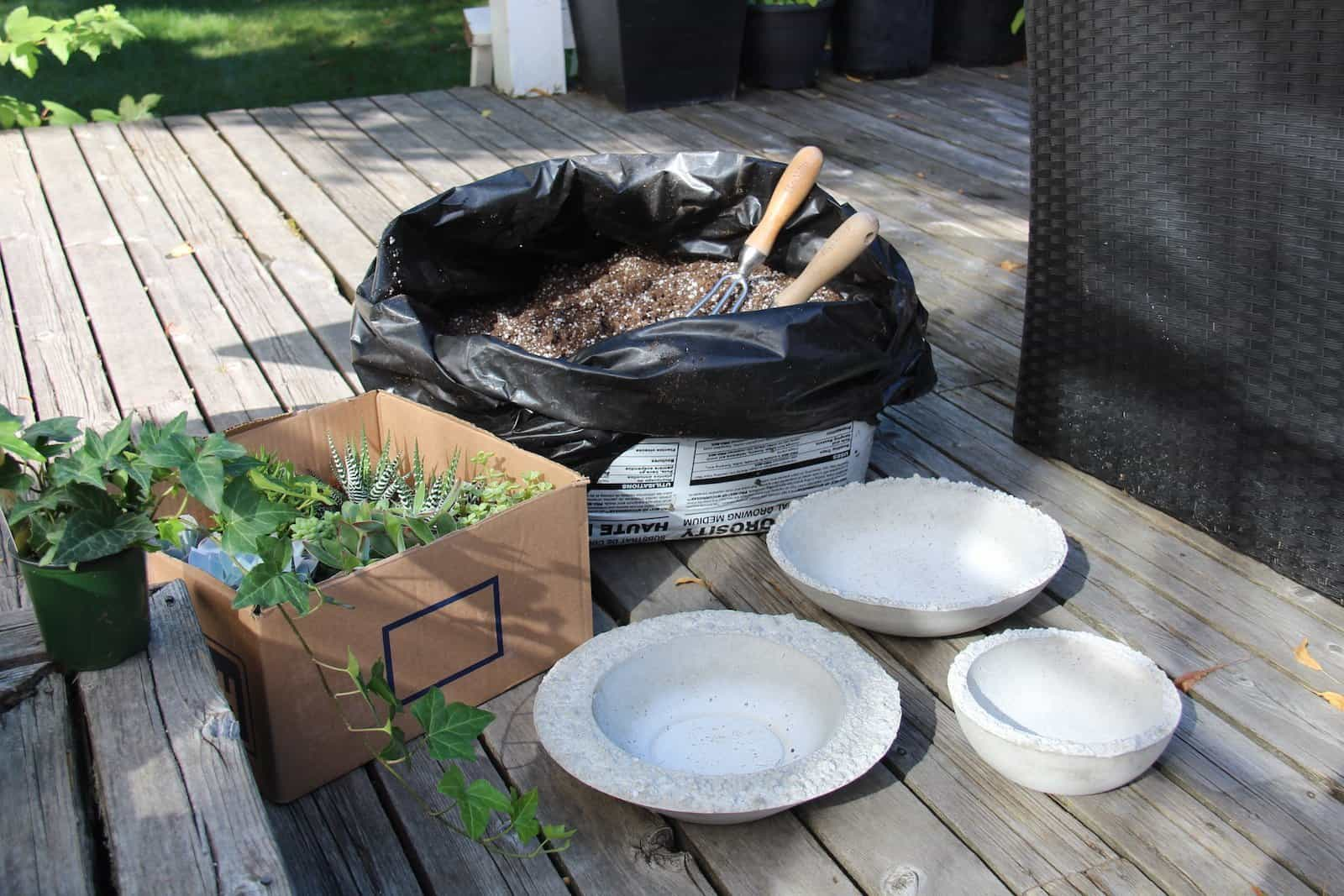 Supplies For Planting Succulent Gardens Home For The