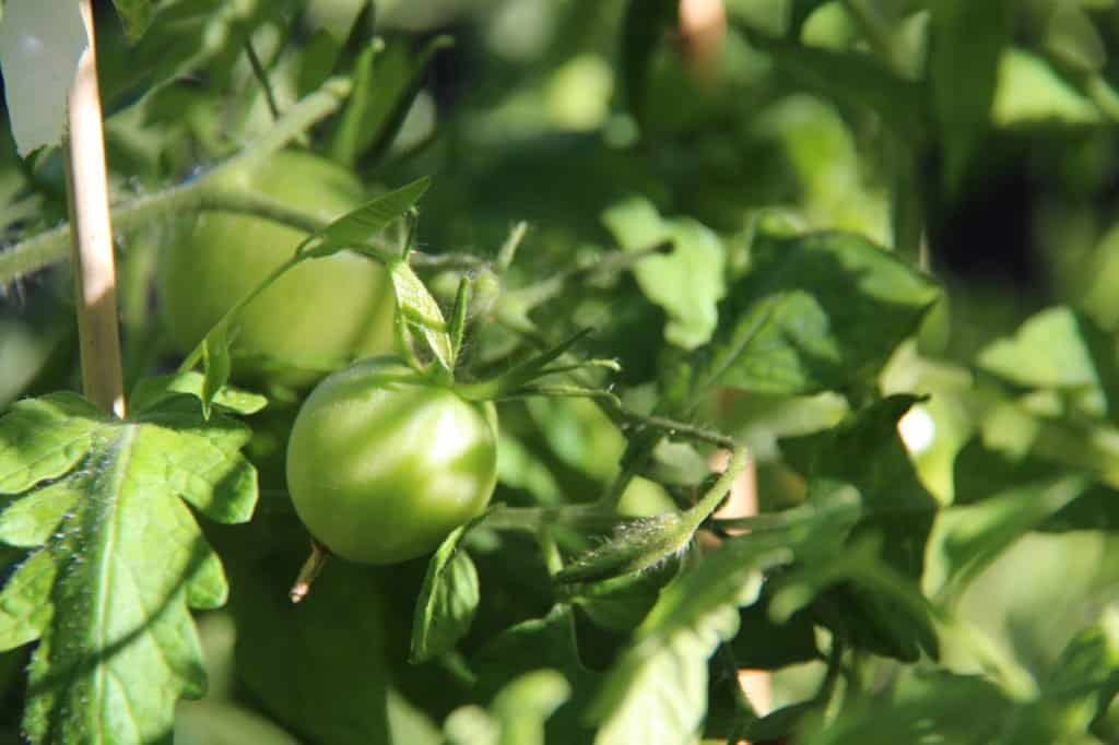 How to Determine the Right Number of Plants for Your Garden | Home for the Harvest