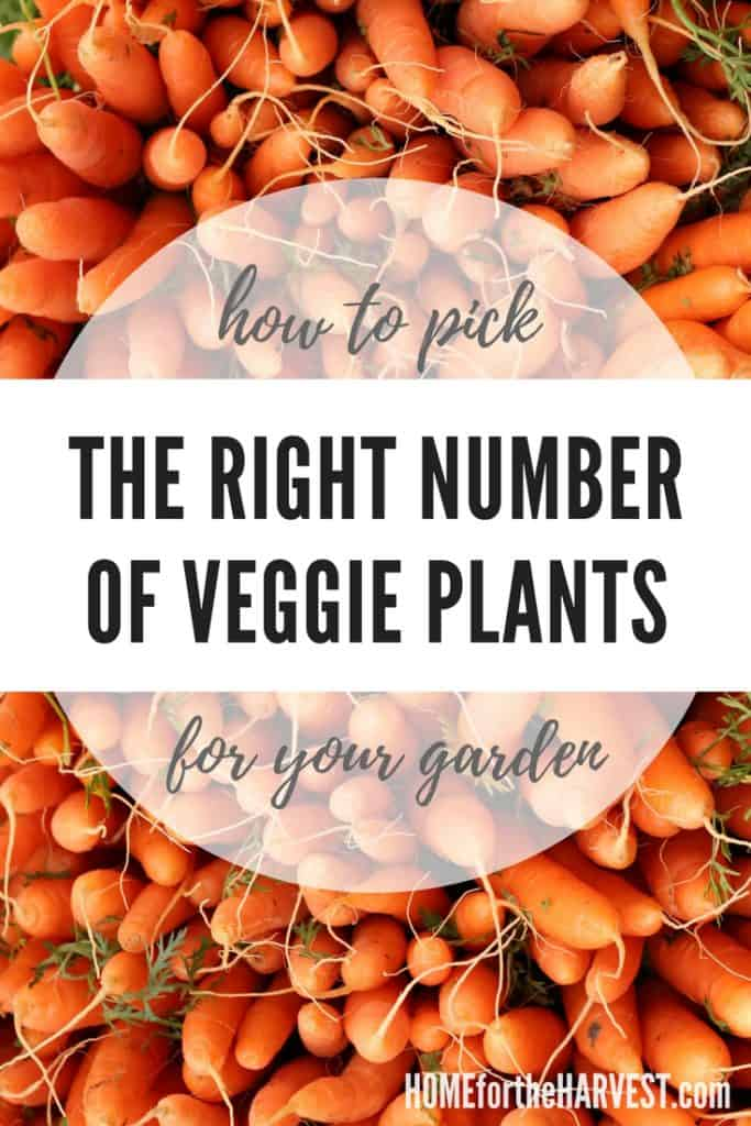 How to Determine the Right Number of Vegetable Plants for Your Garden   Home for the Harvest