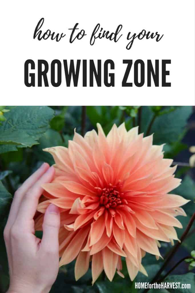 How to Find Your Growing Zone | Organic Gardening | Home for the Harvest