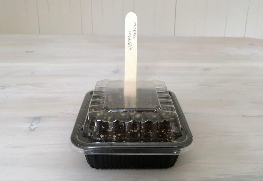 Seed Starting Guide: Frugal Tips for Growing Seedlings Affordably | Home for the HarvestSeed Starting Guide: Frugal Tips for Growing Seedlings Affordably | Home for the Harvest