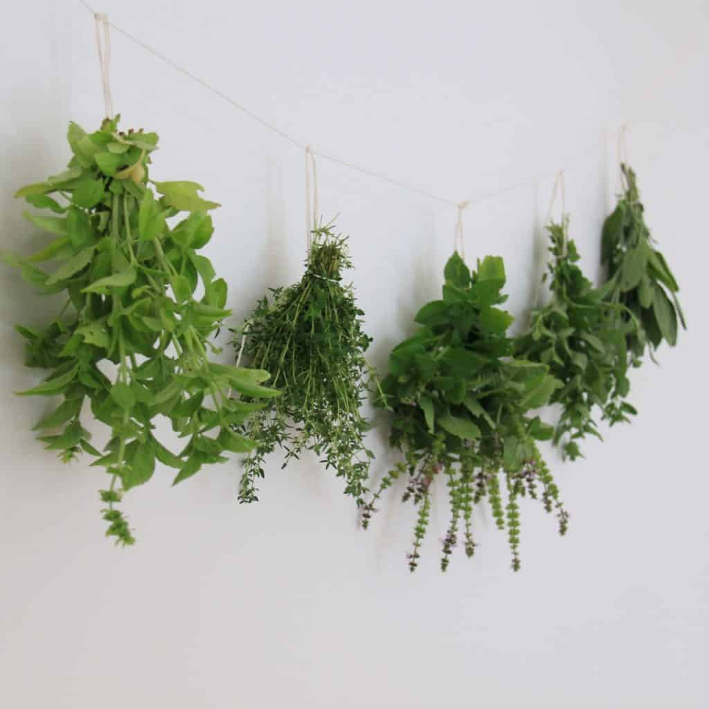 five bundles of green witch herbs hanging from a string against a plain white wall