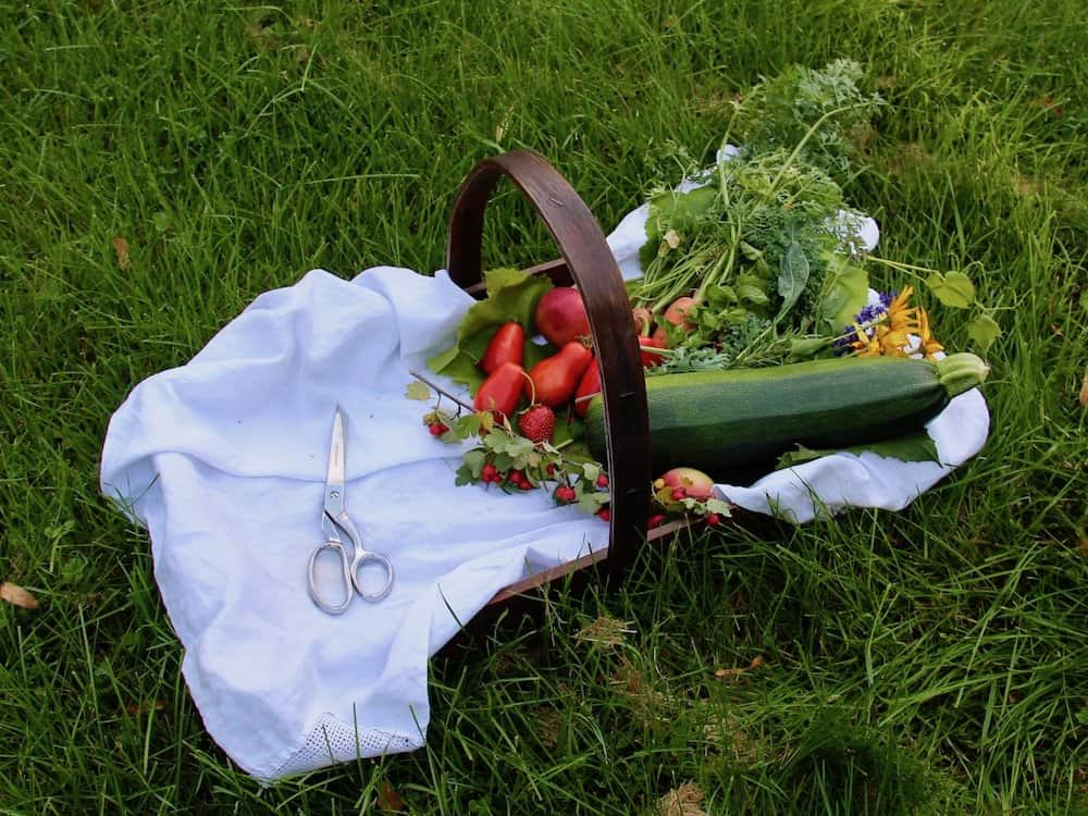 How to Start a Garden - Harvest Season | Home for the Harvest