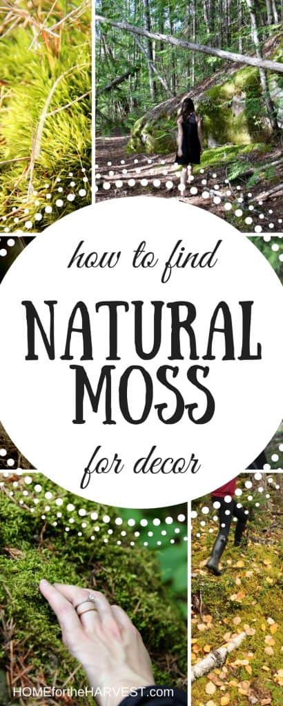 How to Find Natural Moss for Decor