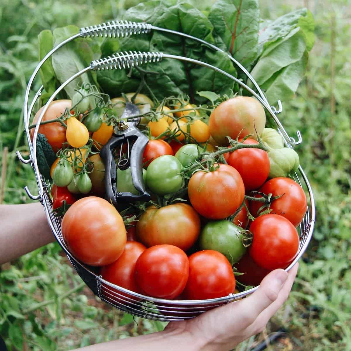 Eat more veggies, and other easy ways to connect with nature by bringing more plants into your life   Home for the Harvest