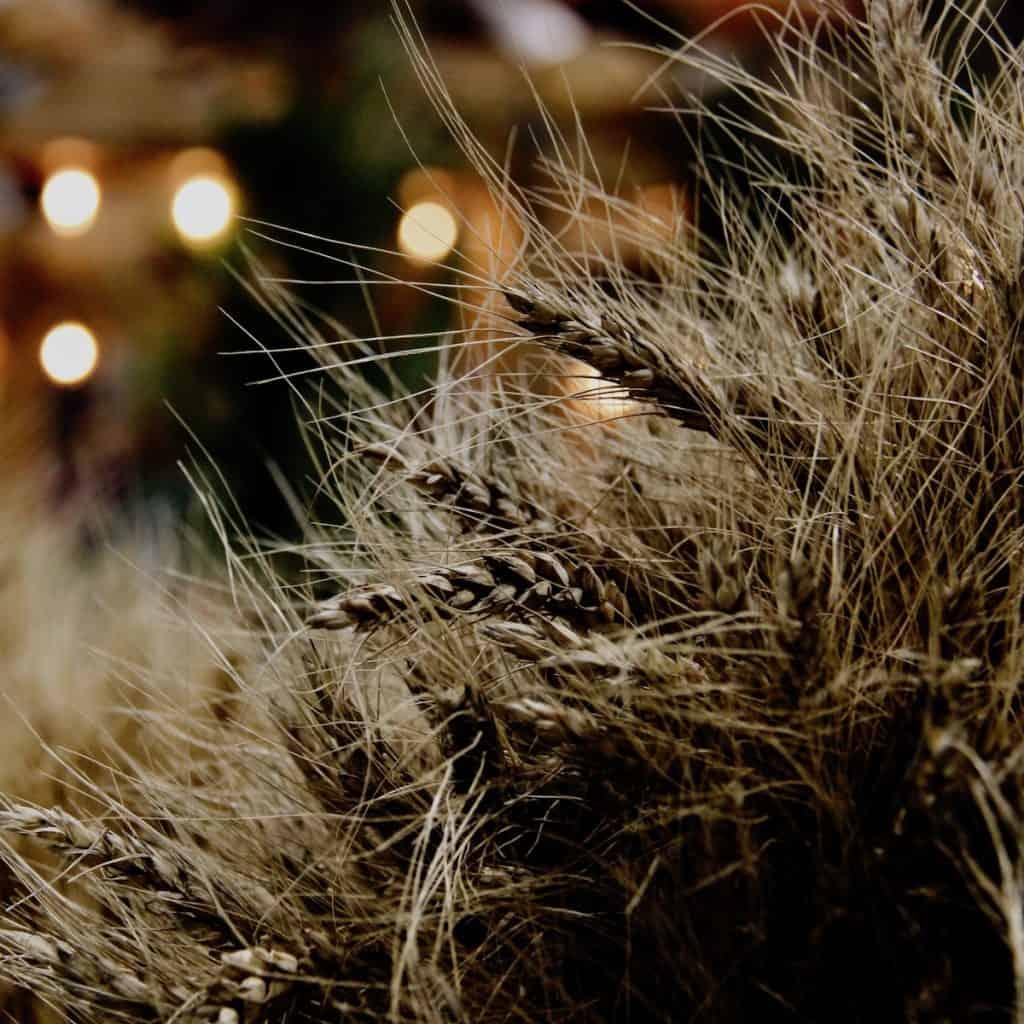 bushels from the grain harvest in the moonlight