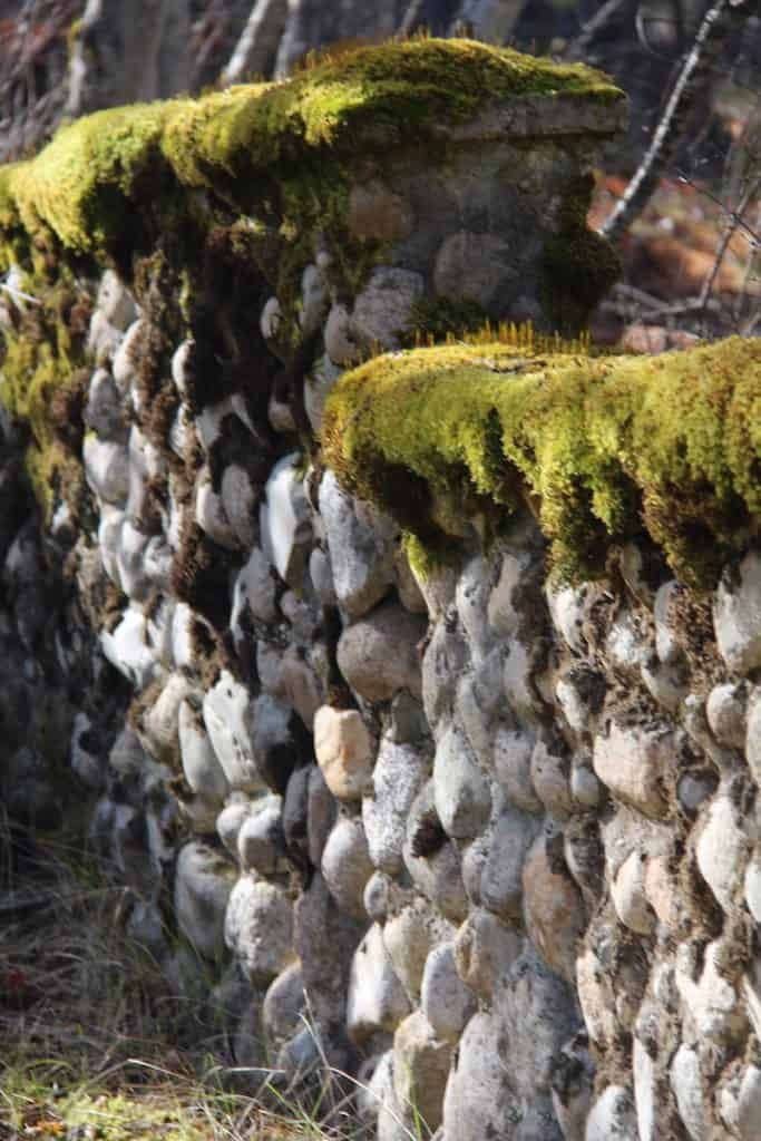 Rock wall with moss showing where to find moss in nature