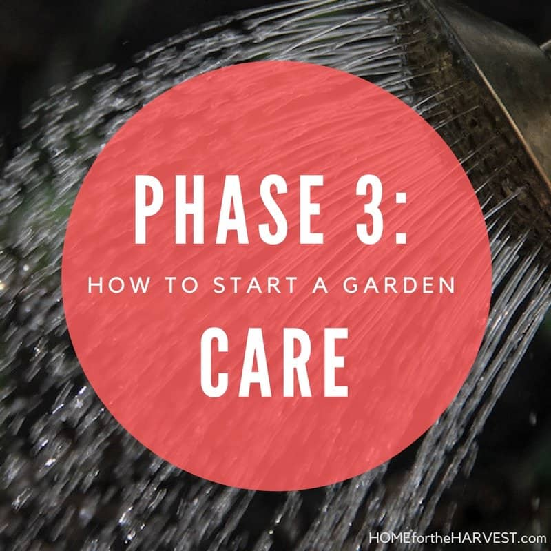 Phase 3: Care for the Garden - How to Start a Garden | Home for the Harvest