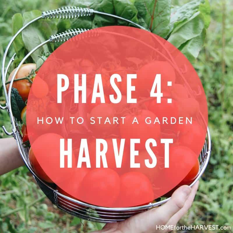 Phase 4: Harvest the Garden - How to Start a Garden | Home for the Harvest