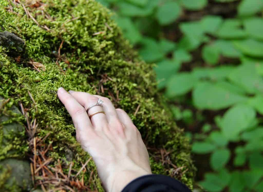How to harvest moss in nature