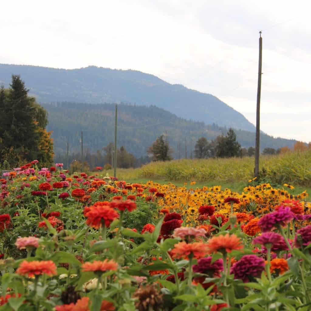 Sources of Nitrogen for Garden Soil