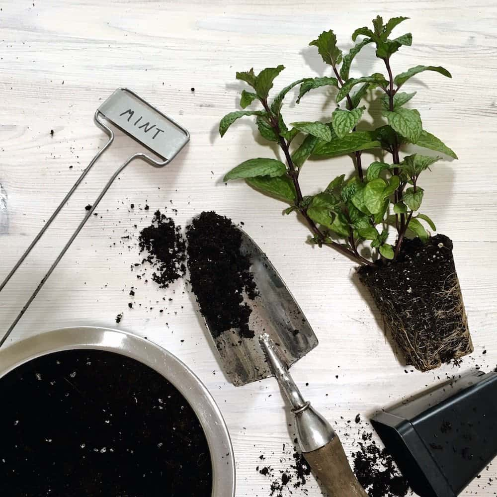 How To Plant An Organic Container Herb Garden
