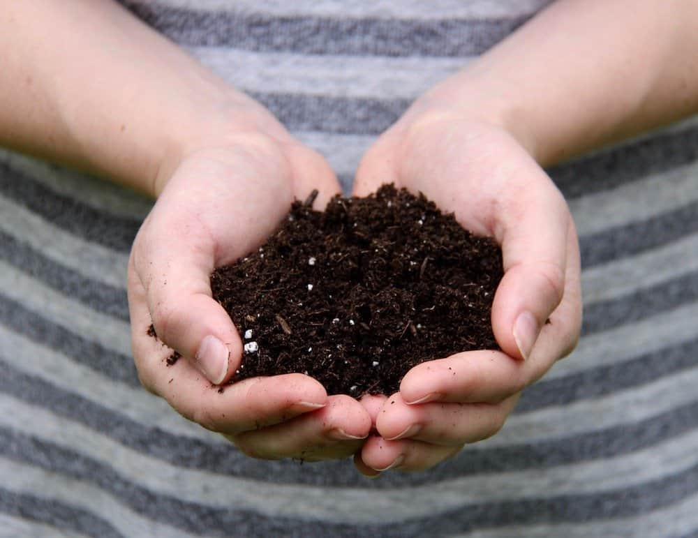 two hands holding brown herb garden soil (pro-mix) in front of a grey sweater