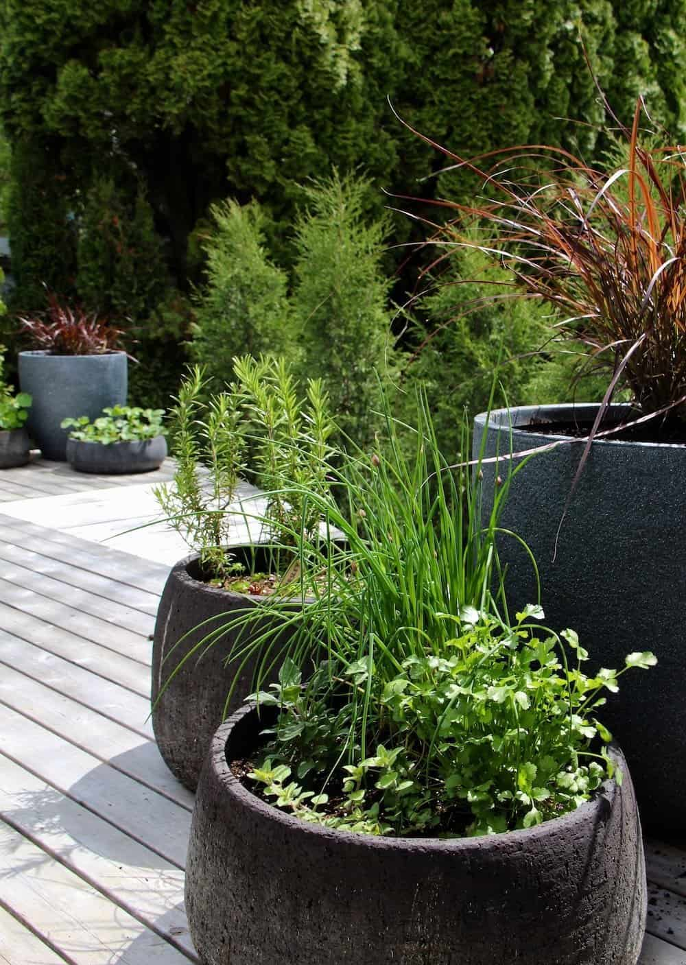large circular container herb garden collection featuring green herb plants on a wooden patio