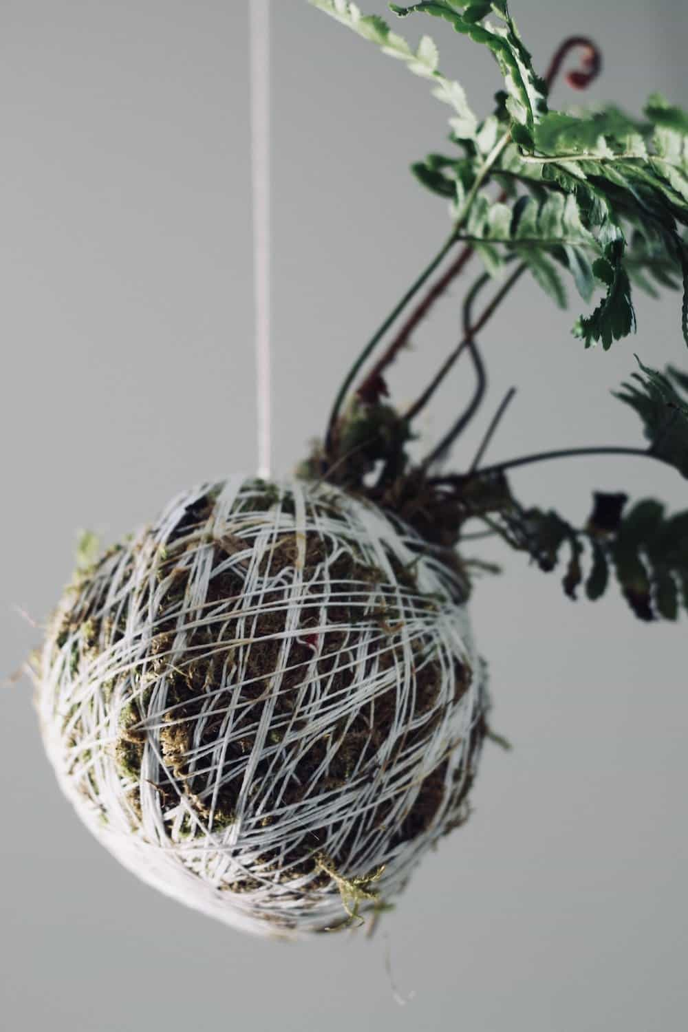 She wraps string around soil and moss to create an amazing hanging string garden! This moss ball is so gorgeous #kokedama #mossball #stringgarden #hanginggarden
