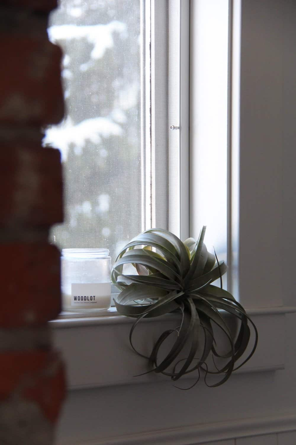 Green tillandsia large air plant and white candle on white windowsill with brick chimney in foreground