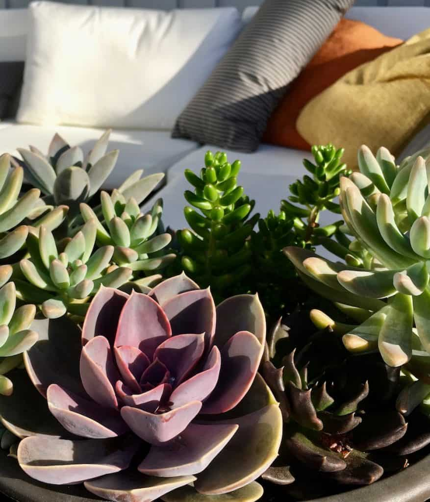 succulent plants in bowl as garden gifts in front of patio sofa