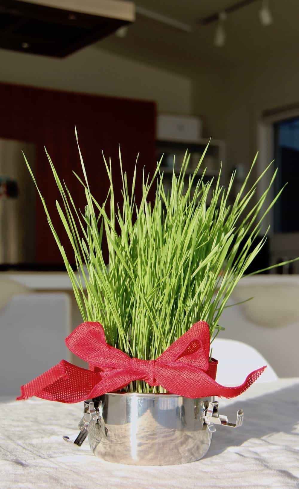 green wheatgrass blades growing out of round metal container with red bow around grass blades for a valentines gift