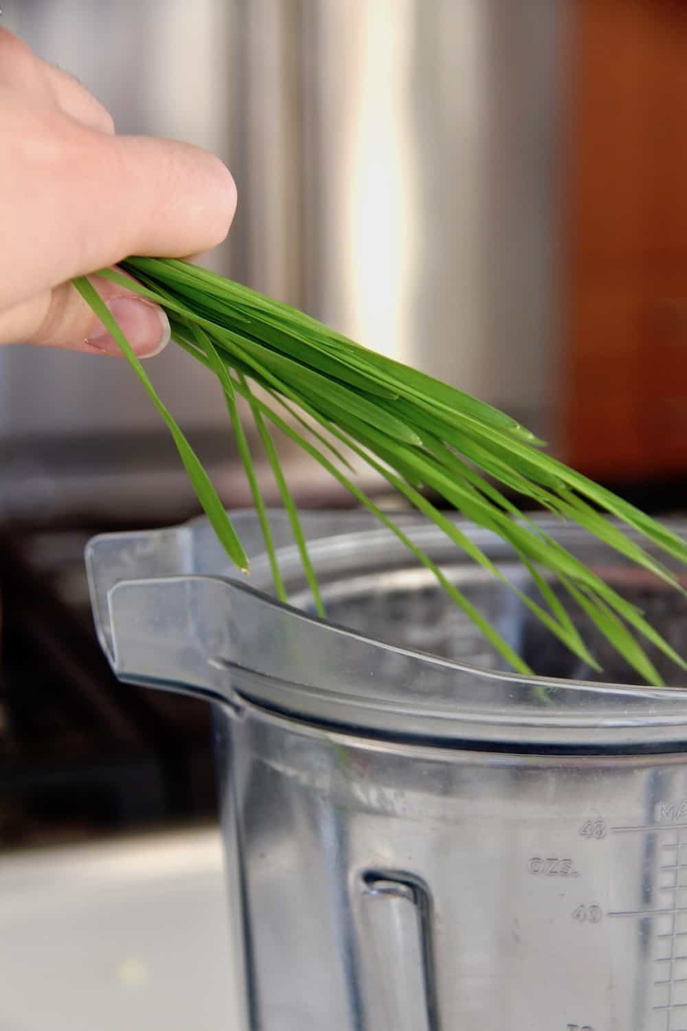 green wheatgrass blades being added to vitamix blender container