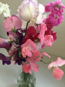 pink sweet peas grown from non gmo flower seeds in a vase on a white table