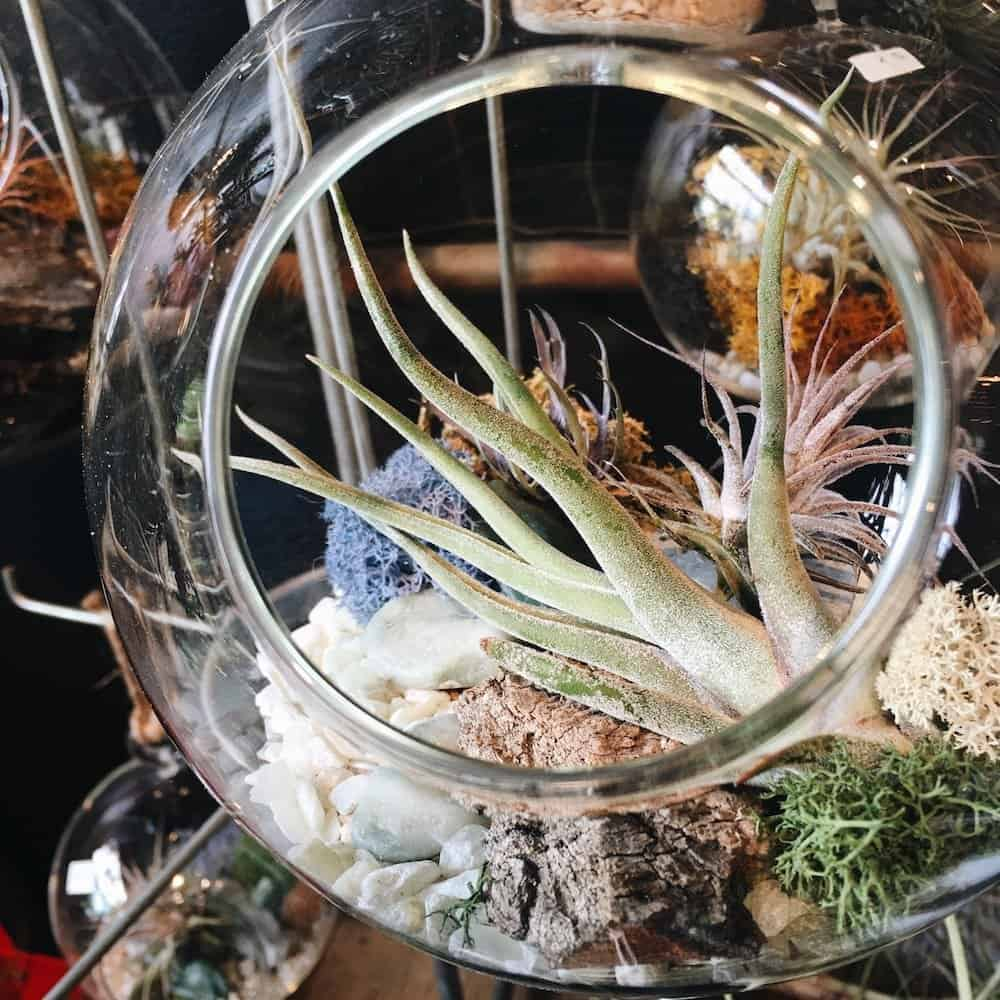 hanging plant terrarium for air plants, cacti, or other houseplants