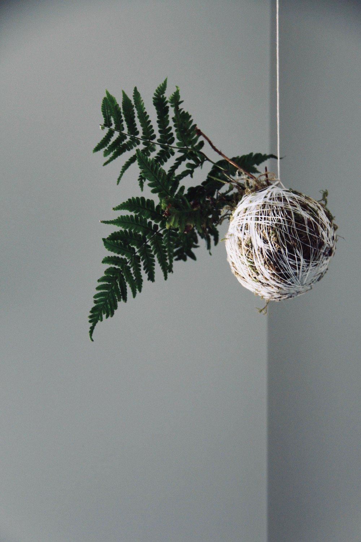 hanging kokedama fern indoor string garden