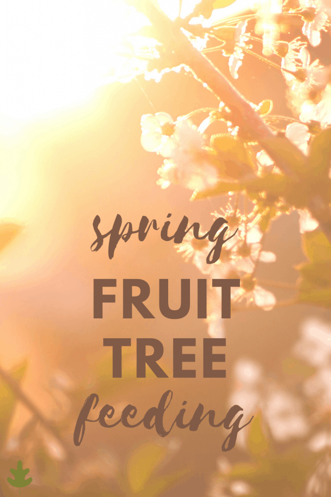 spring fruit tree feeding