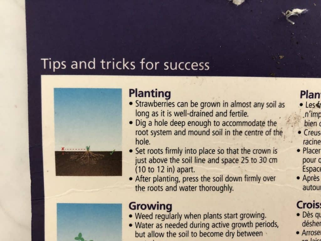 Package Label Instructions for How Far Apart to Plant Strawberries