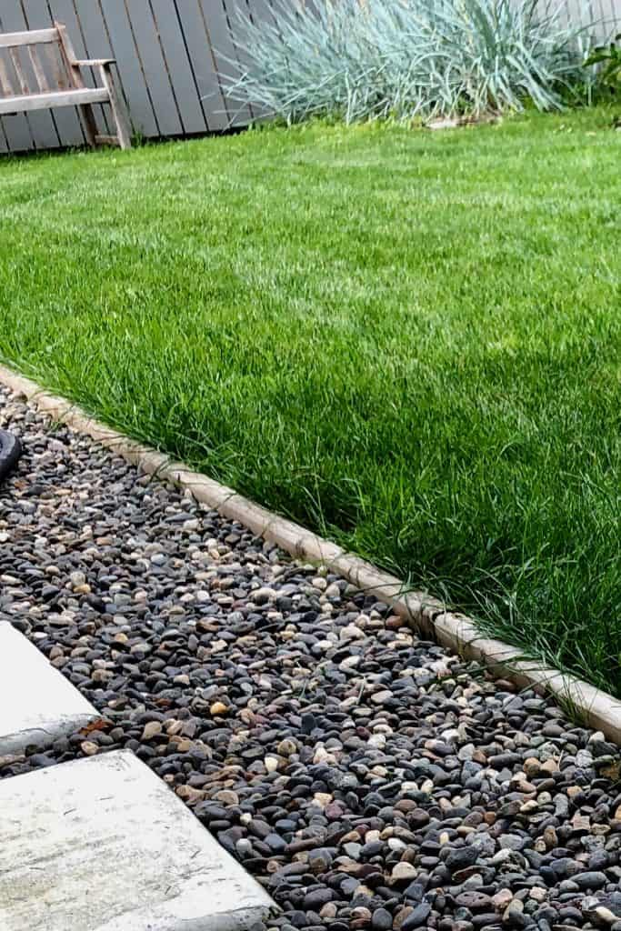 Seasonal Variation in Turf Lawn Grass Growth