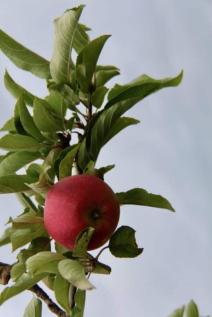 When is apple picking month - its September