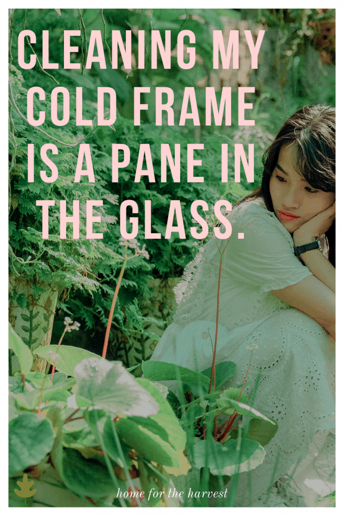 Cleaning my cold frame is a pane in the glass.